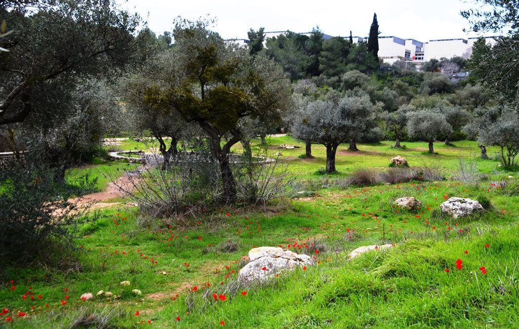 Jerusalem Valley of Cross wild fowers