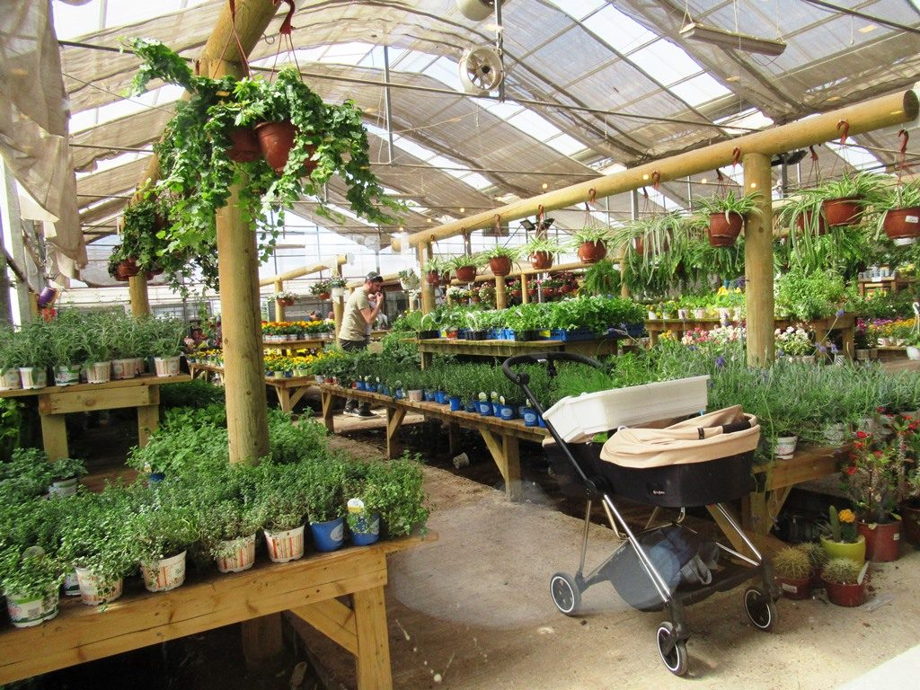 Nursery for plants in Jerusalem