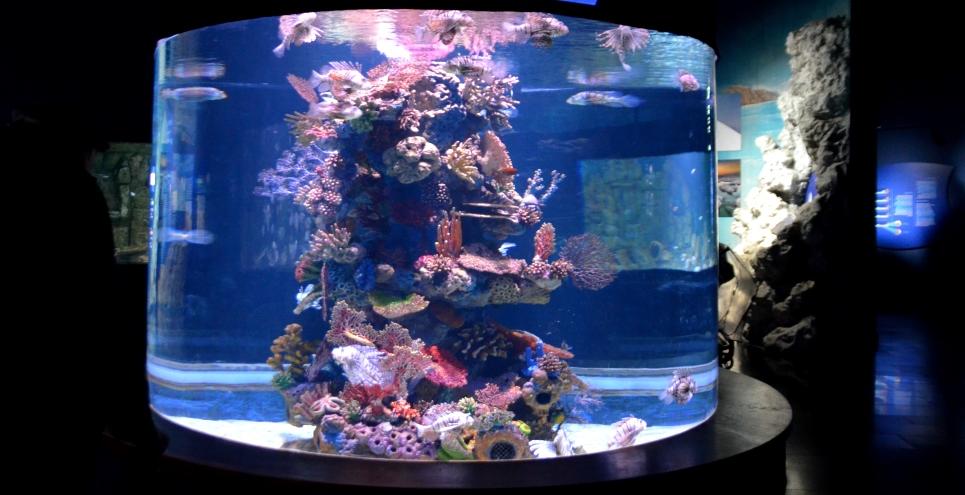 Fish tank in Jerusalem Aquarium