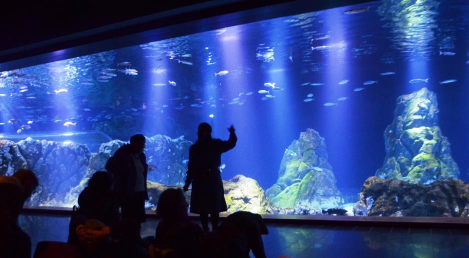 Large fish tank in Jerusalem Aquarium