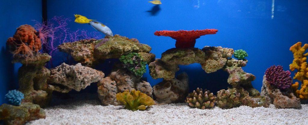 Jerusalem Aquarium long horn cowfish