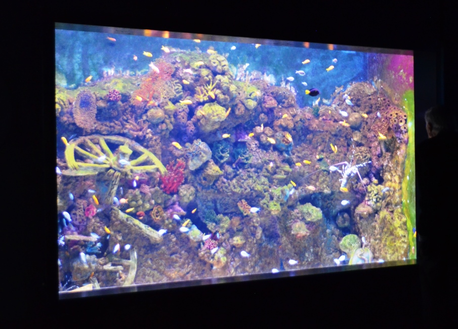 Colorful fish in Jerusalem Aquarium