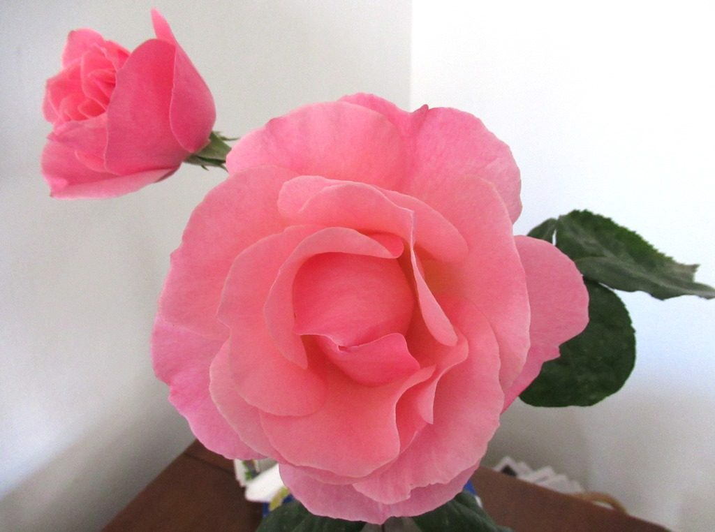 Large and small roses in a vase