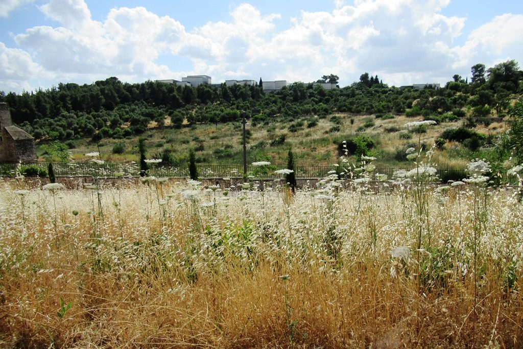 Jerusalem Israel Valley of Cross with Israel Museum on top of hill dried weeds of summer