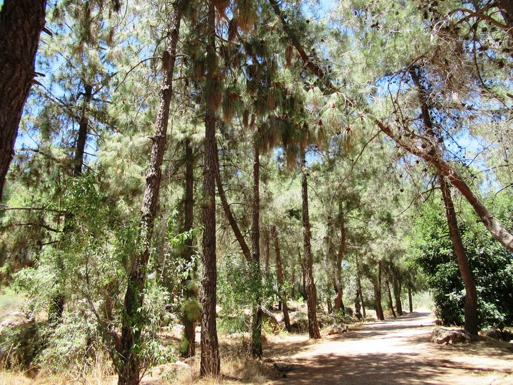 Jerusalem Israel path in city that looks like forest