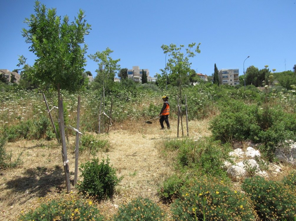 Cleaning dried weeds at Jerusalem Valley of the Cross
