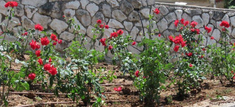 Jerusalem Moving Outside: Summer in Sacher Park