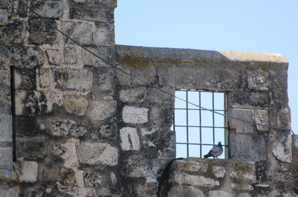 Jerusalem monastery bird perched on high window