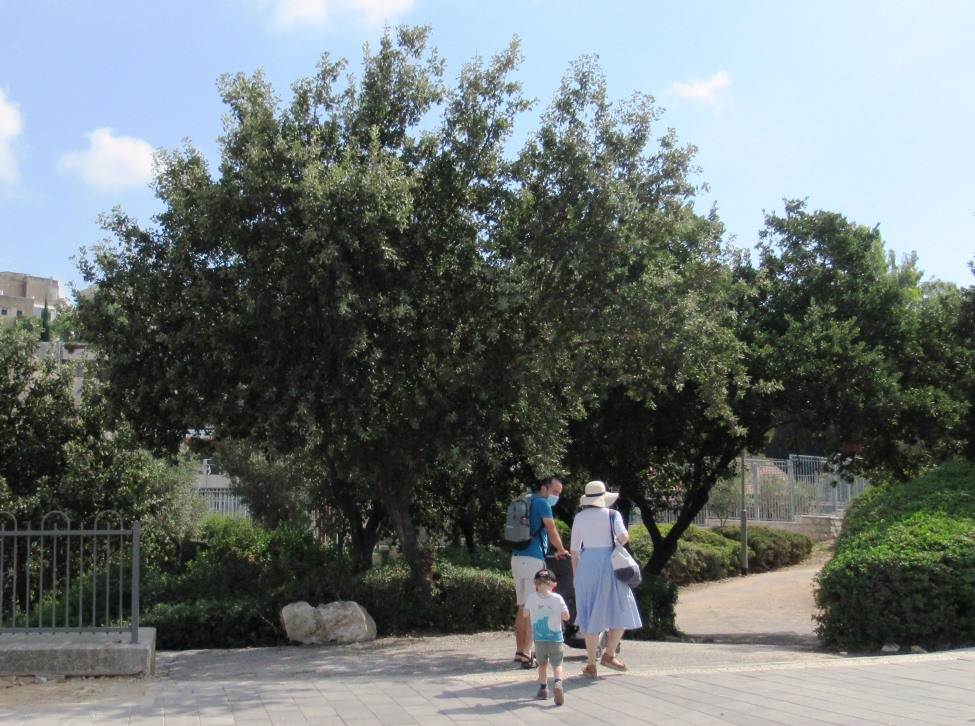 Jerusalem family walking in summer