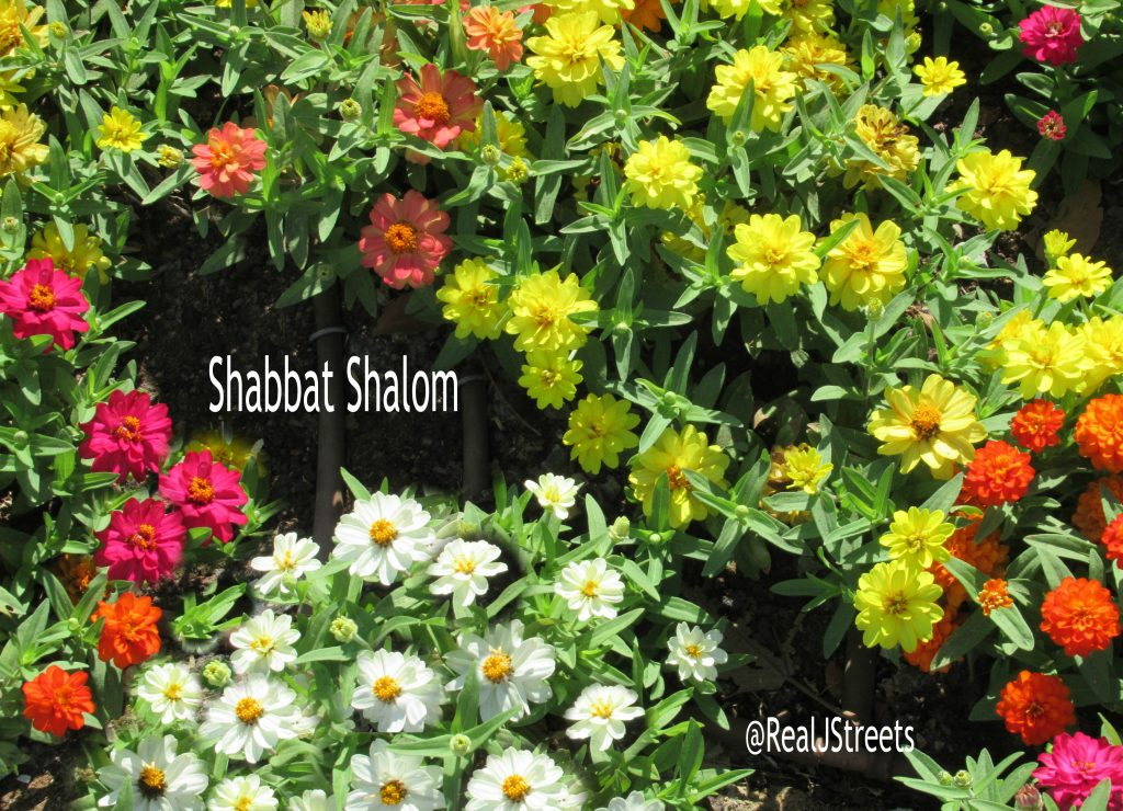 Shabbat Shalom written on Jerusalem Israel flowers