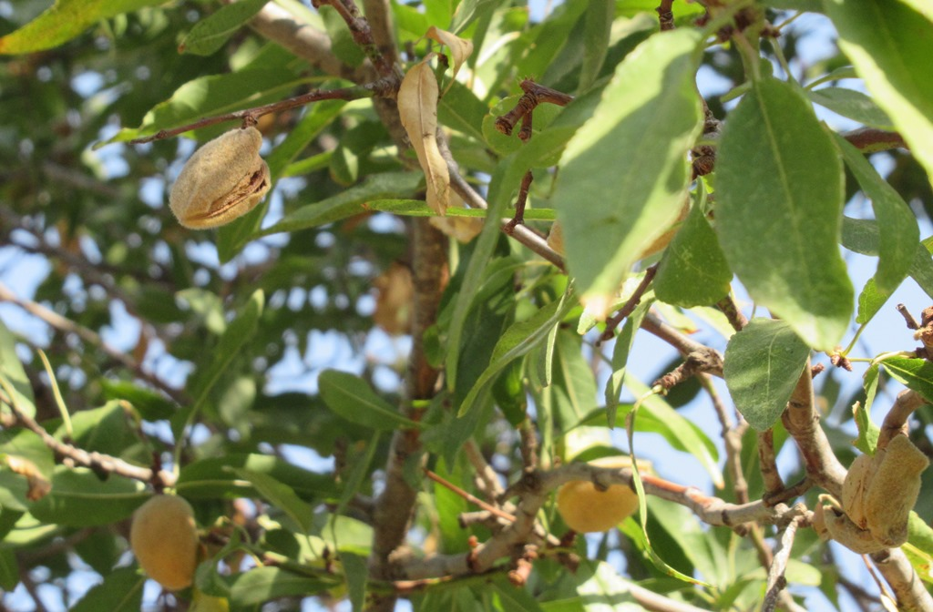 This image has an empty alt attribute; its file name is almond-walk-001-b.jpg