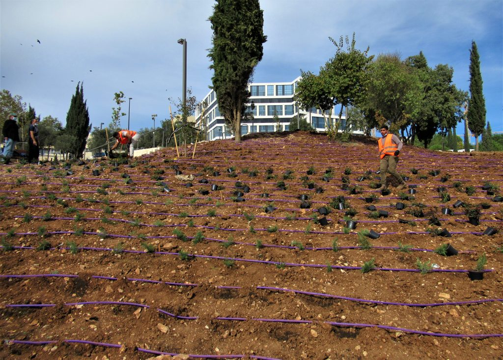 Jerusalem Sacher Park landscaping during coronavirus limitations