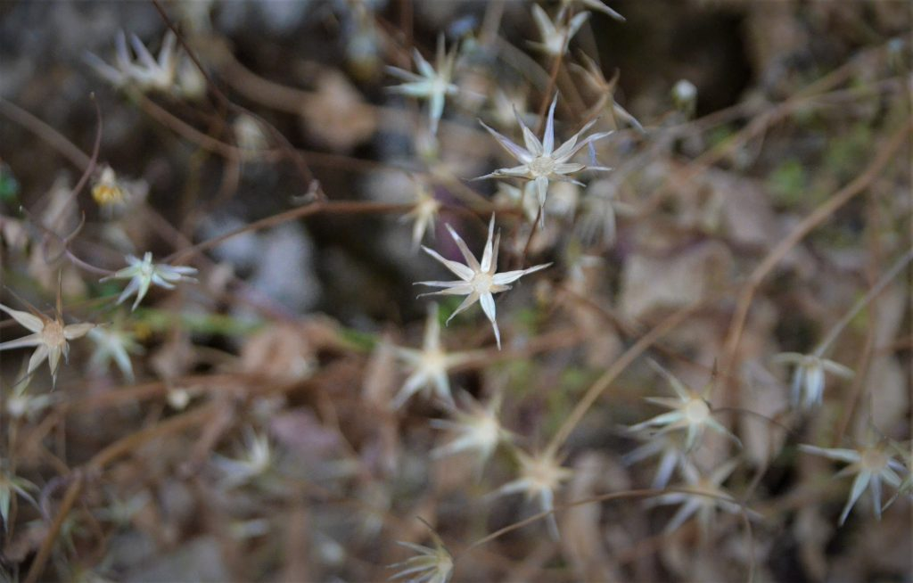 Pretty image of weeds